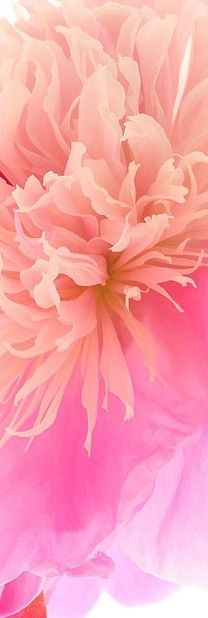 #pink flower in one color value