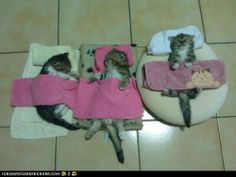 ...and the kittens lay all snug in their beds.