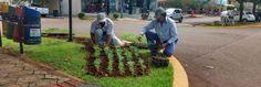 Mudas de flores são plantadas para embelezar ainda mais Ubiratã