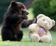 Sooo adorable...little bear!