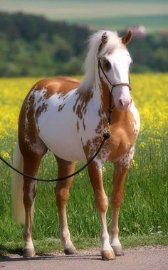 a beautiful and elegant horse!!!-- pic.twitter.com/4lVh8UBxwz