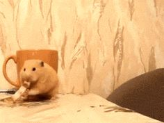 I love cat gifs and dog gifs. Funny Cats, Cute Cats, all the time.Big animals gif lover too. Animals And Pets, Funny Animals, Cute Animals, Hamster Russe, Gato Gif, Demotivational Posters, Cute Hamsters, Gif Animé, Animated Gif