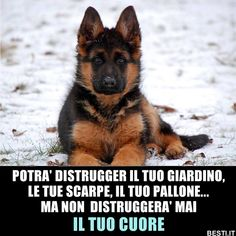 Cute Cats And Dogs, I Love Dogs, Animals And Pets, Dogs And Puppies, Cute Animals, Dog Phrases, German Shepherd Breeds, Dog Quotes, Marketing Digital