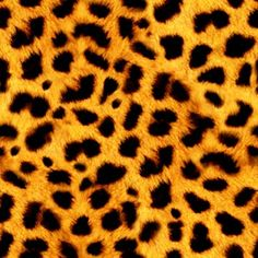 Animal Print Zebra Print Twitter Background - Hot-lyts