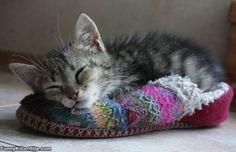 Taking a cozy nap