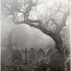 I love the shape of this tree leaning over the cemetery. I'm thinking of making my own fake tree I might use this shape