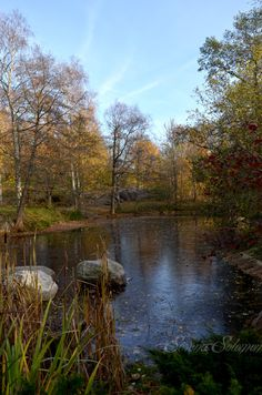 Urheilupuisto - Pond is starting to freeze, Turku, Finland