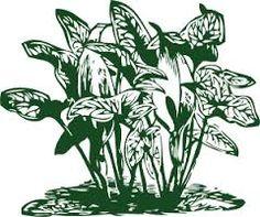 Image result for vector art plants