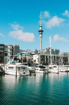 Auckland New Zealand New Zealand Cities, Visit New Zealand, New Zealand Travel, Wellington City, Wellington New Zealand, Auckland New Zealand, Australia Travel, Visit Australia, Queensland Australia