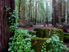 The redwoods.  I'm betting fairies live here.  <3