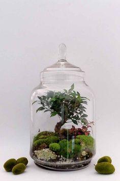 Stylish Bonsai Terrarium Ideas With Miniature Landscaping Jars - Mini Garden Orchid Terrarium, Bottle Terrarium, Fairy Terrarium, Terrarium Centerpiece, Mini Terrarium, Hanging Terrarium, How To Make Terrariums, Bottle Garden, Terrarium Plants