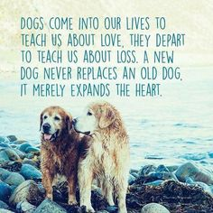 """Dogs come into our lives to teach us about love. They depart to teach us about loss. A new dog never replaces an old dog. It merely expands the heart."""