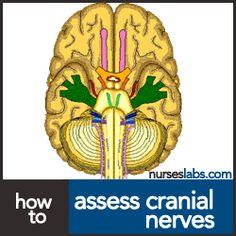 How to Assess Cranial Nerves? Cranial Nerves Assessment Cheat Sheet