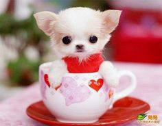 Pup In A Cup! I usually don't pin animal pics, but this is just too cute!
