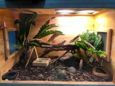 Want to bring a beardie home but not sure which bearded dragon cage or tank to go for? Read our enclosure guide before you make a purchase. Bartagamen Terrarium, Large Terrarium, Bearded Dragon Enclosure, Bearded Dragon Cage, Window Ventilation, Glass Cages, Front Windows, Baby Dragon, Geckos