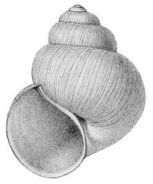Shell shape