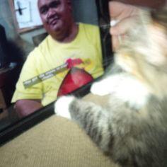 New kitty loves Hawaii Five O