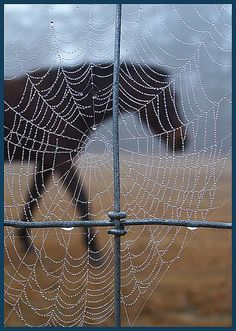 spiderhorse, by easphoto | Flickr