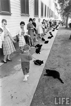 black cat auditions hollywood 1961-4...I don't like cats, but I love the way the women are all looking at the little girl's cat