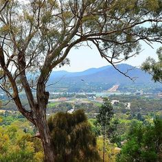 South of the city centre, Red Hill offers an amazing lookout over many of our national icons and sweeping vistas of Canberra from the south. In autumn, the brilliant reds and oranges of the deciduous trees in the suburbs below are stunning. Thanks to Instagrammer @therealog_88 for capturing this Red Hill view. #visitcanberra