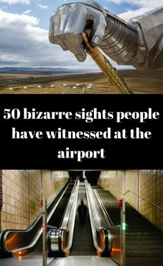 #50 #bizarre #sights #people #have #witnessed #at #the #airport Polar Bears Live, Baby Christmas Photos, Perfume, Strange Places, Stylish Girl Pic, Wtf Funny, Beautiful Horses, Travel With Kids, Just Go
