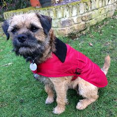 Barney modelling his new Red Barbour Dog coat.