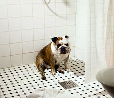 'One Dog Policy' - The Loneliness of Only {Pet} Children | Images by Maija Astikainen. Portfolio sample.
