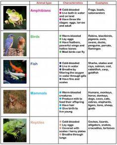 mammals activities for kids Animals in primary school Space Activities, Animal Activities, Science Activities, Animal Crafts, Animal Classification Activity, Classifying Animals, Home Education Uk, Flashcards For Kids, Animal Science