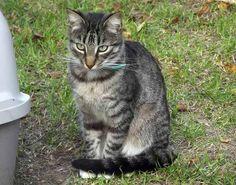 Un chat tué par une flèche en Gironde : une association porte plainte - Cause animale - Wamiz