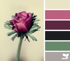 Flora Hues~Design Seeds.