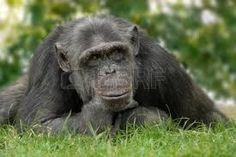 noel chimpancé - Buscar con Google
