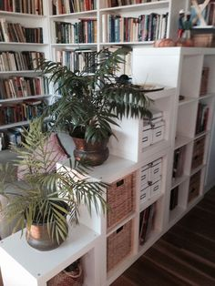 The IKEA Expedit (la...
