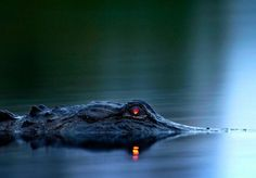Amazing Crocodile photos!!