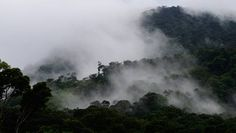 The 8 best rain forest destinations that you haven't visited (yet) | MNN - Mother Nature Network