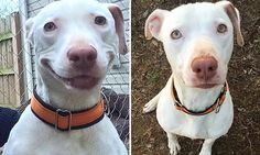 Abandoned dog can't stop smiling now he's found a loving home | Daily Mail Online