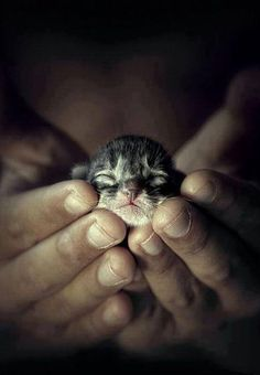 How cute !!!! Small kitten in hands