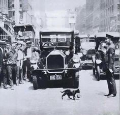 Traffic suspended to let a cat carrying a kitten cross the street.  July 1925, New York.