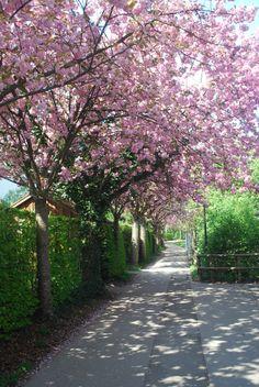 Ingolstadt au printemps. Spring in bavaria. Bavière. https://www.facebook.com/destinationbaviere