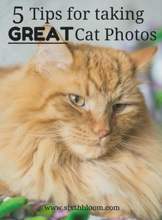 5 Tips for Taking Great Cat Photos, Pet Photography, Pet Pictures, Cat Pictures, Cat Photography