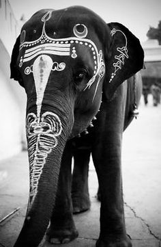 Painted elephant.