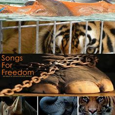 Don Lichterman: Songs for Freedom CD, Album for Animal & Wildlife Rights, Welfare and against all cruelty towards wildlife and animals, Sunset Special Markets (SSM), Animal League Defense Fund (ALDF)