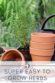 These herbs are easy to grow for any home gardener - beginner or experienced! Learn more about these 5 awesome herbs for your home garden. Start your own herb garden today! Growing Vegetables Indoors, Fall Vegetables, Growing Herbs, Growing Tomatoes, Indoor Gardening Supplies, Container Gardening, Kitchen Herbs, Vegan Kitchen, Kitchen Recipes