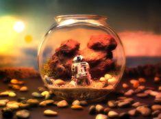 Star Wars R2-D2 terrarium by Tony Larson