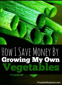 Want to save money and spend less? If so, one easy way to help your budget is to grow your own food. Here's how I save money by growing my own vegetables. #homesteading #frugality