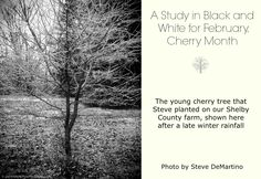More about Cherry Month.  See more photos from PawPrintsLife, including Virgil Sweeden and Steve DeMartino, at www.Facebook.com/PawPrintsLife!
