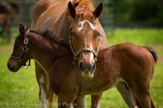 Cute! I love the mare's markings!