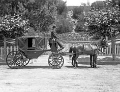 A landau carriage, and driver, probably Wanganui region (NZ),  January 1908.  Peter Denton.