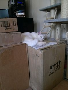 Sleeping on his daddy's work boxes