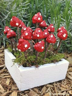 You can make your own miniature fairy garden mushrooms using acorn caps and twigs from your yard! I was inspired by the new book Crafting with Nature, which is my new favorite gardening and craftin…