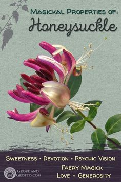 Magickal properties of Honeysuckle – Grove and Grotto Witchcraft Herbs, Green Witchcraft, Magick, Wiccan, Honeysuckle Flower, Magic Herbs, Herbal Magic, Witch Herbs, Plants